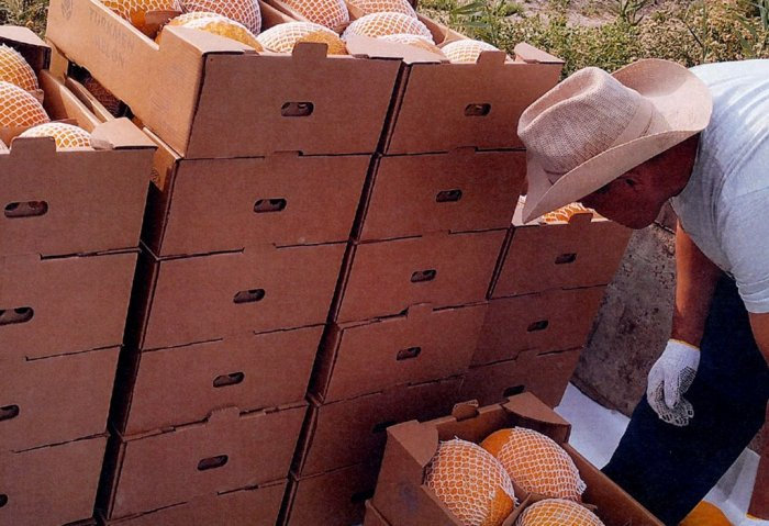 Turkmenistan Begins Export of Melons to Austria