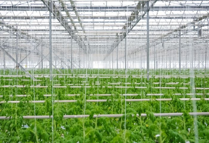 Number of Greenhouse Complexes in Lebap Velayat Exceeds Twenty