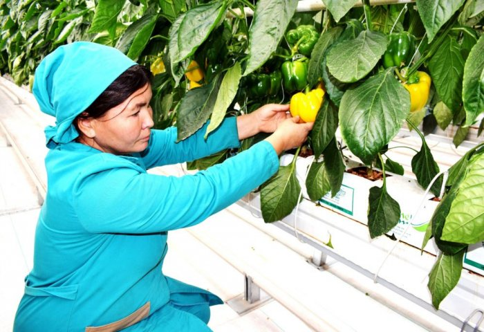 Turkmen Agricultural Producer Aims to Grow Bananas at Greenhouse