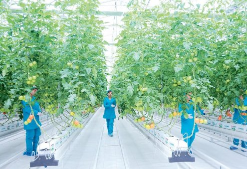 New Private Greenhouse Appears in Turkmenistan's Balkan Velayat