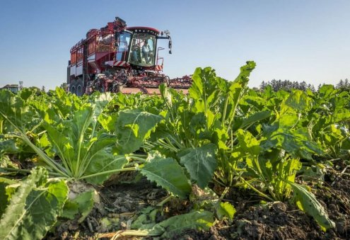 Farmers in Turkmenistan's Bayramali Expect Rich Harvest of Sugar Beet