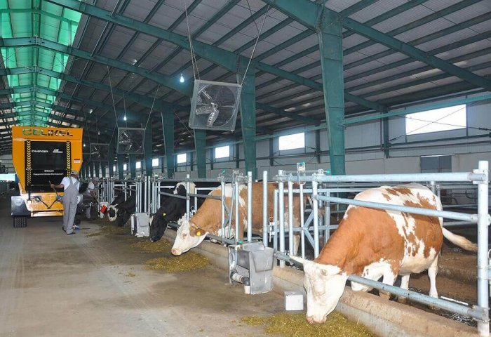 Private Producers' Share in Turkmen Meat, Dairy Production Exceeds 90%