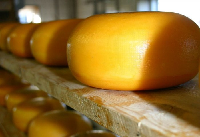 Livestock Complex in Northern Turkmenistan Launches New Cheese Brand