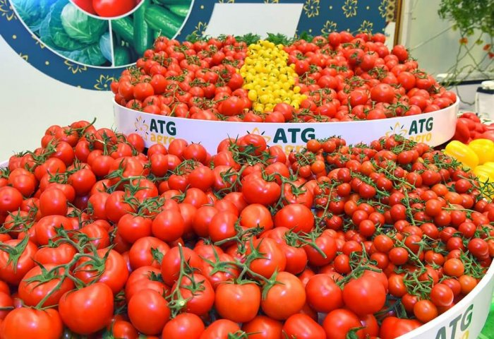 Turkmenistan's Altyn Tug Grows Eight Varieties of Tomatoes