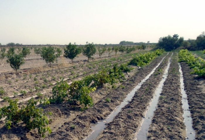 Farmer Grows Fruit Orchards on Karakum's Desert Soil