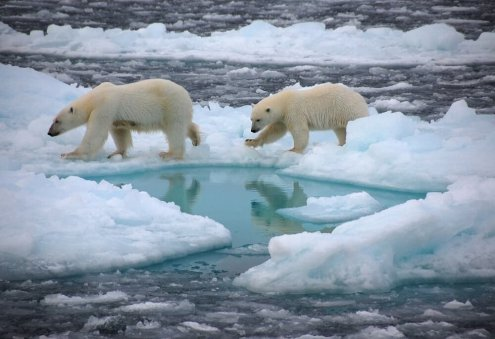 North Pole to Be Ice-Free by 2050, Scientists Warn
