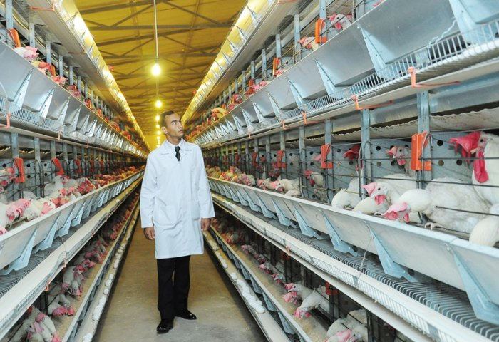 Röwşen-Rahym Expands Its Business in Greenhouse Farming and Poultry