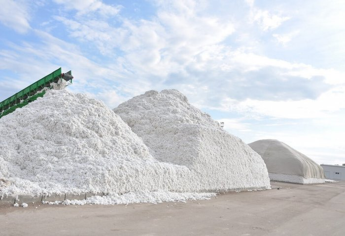 Turkmenistan Harvests 1.25 Million Tons of Cotton