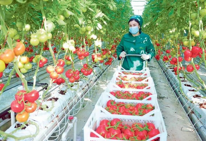 Businesses in Turkmenistan's Lebap Export 4.7 Thousand Tons of Tomatoes
