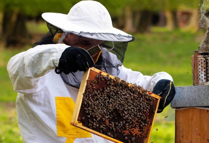 July - Busy Month for Beekeepers in Turkmenistan