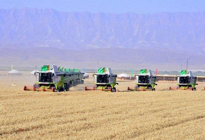 Wheat Harvesting Campaign Starts in Turkmenistan
