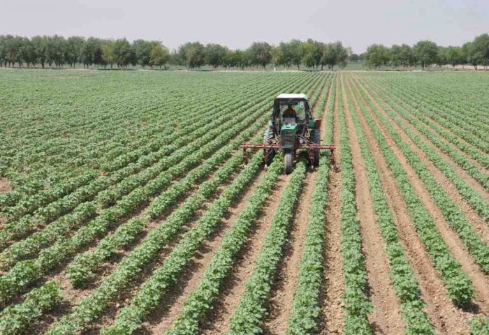 Turkmen Farmers to Gain from Agricultural Land Reforms